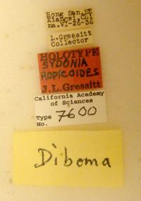 Sydonia ropicoides image