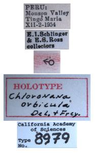 Chloronana orbicula image