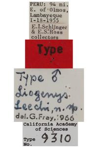 Liogenys leechi image