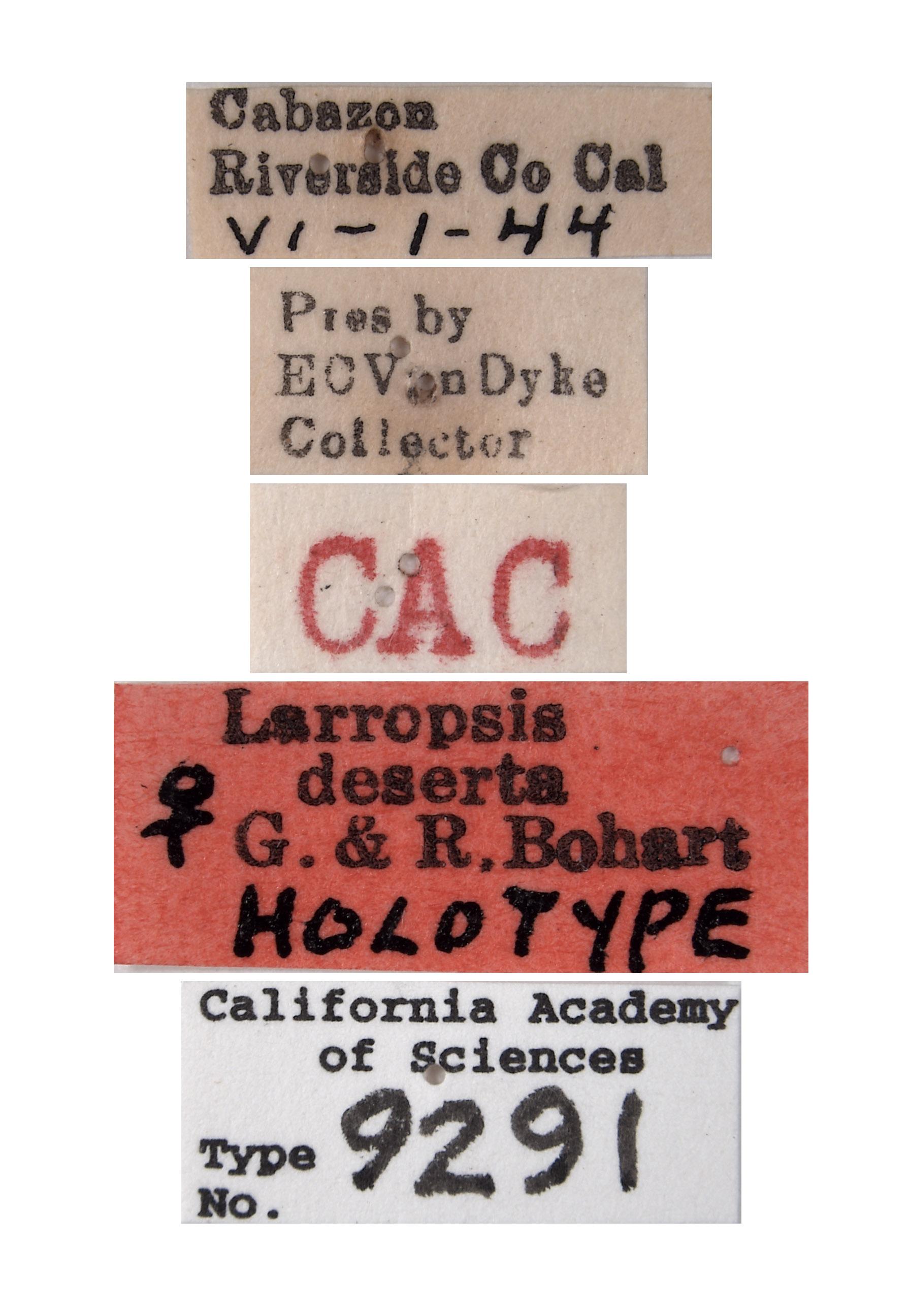 Larropsis deserta image