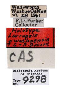 Larropsis washoensis image