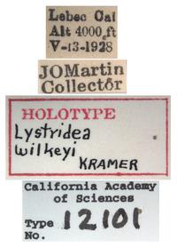 Lystridea wilkeyi image