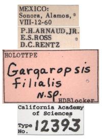 Gargaropsis filialis image