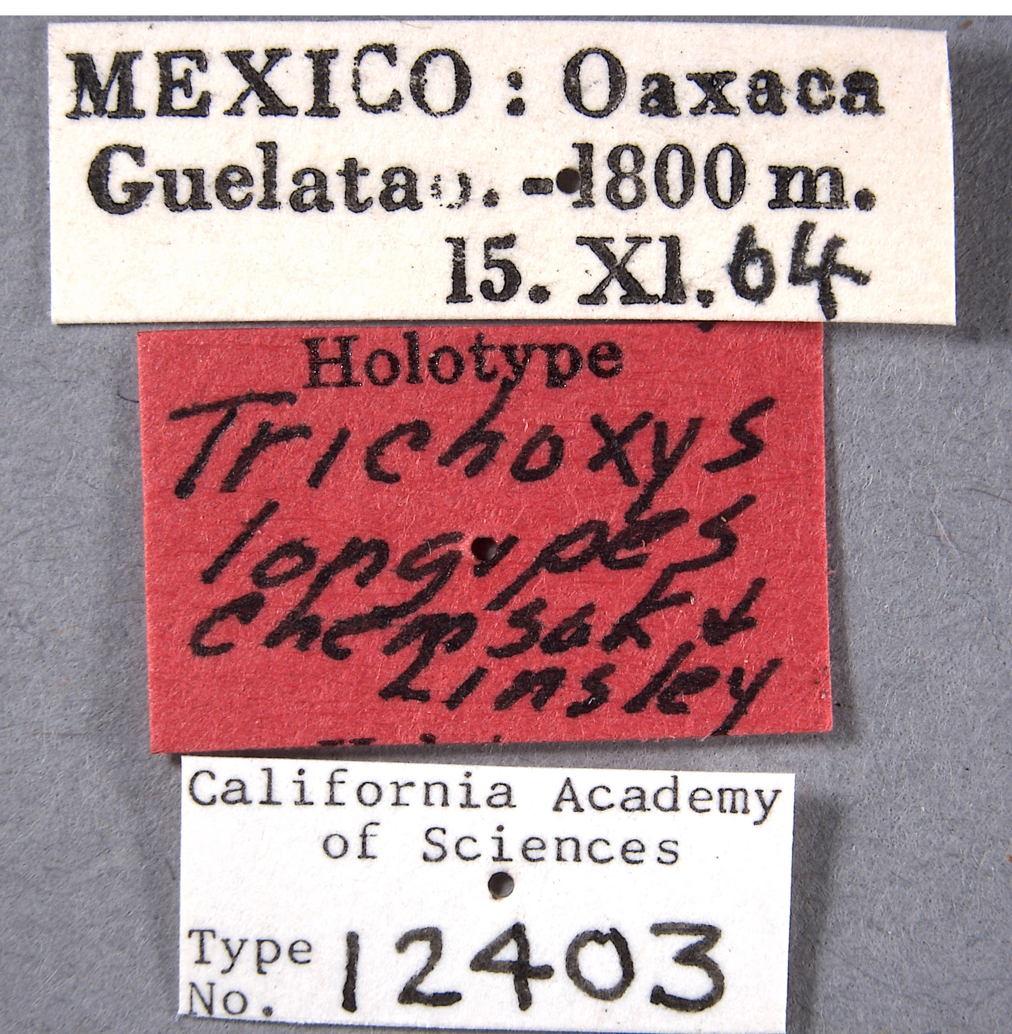 Trichoxys image