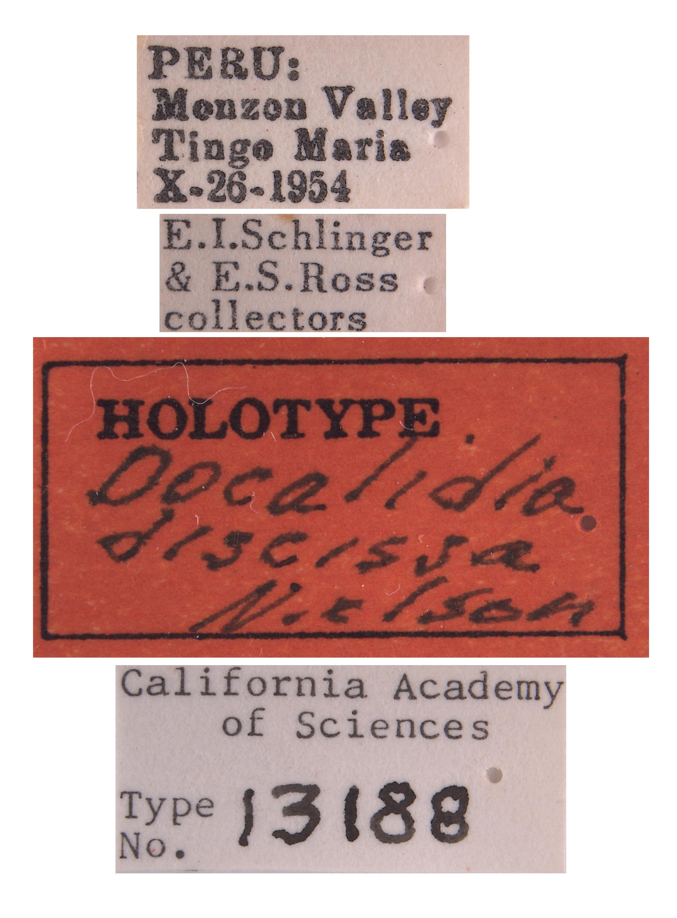 Cicadellidae image