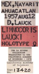 Limnocoris laucki image