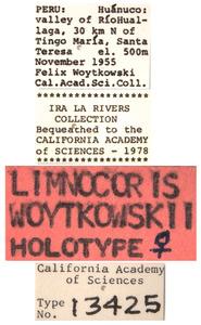 Limnocoris woytkowskii image