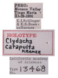Clydacha catapulta image