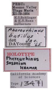 Phereurhinus sosanion image