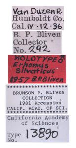 Errhomus silvaticus image