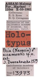 Acia assamensis image
