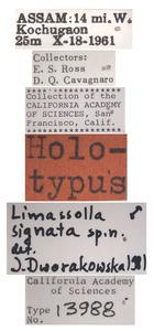 Limassolla signata image