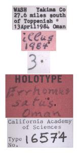 Errhomus satus image