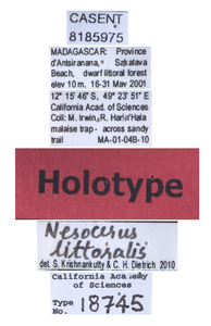 Nesocerus littoralis image