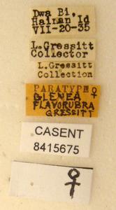 Image of Glenea flavorubra