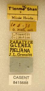 Image of Glenea pieliana