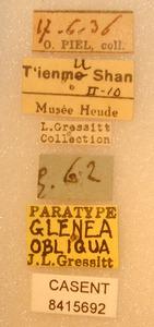 Image of Glenea obliqua