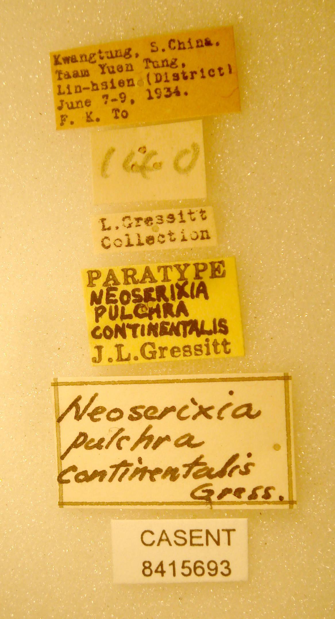 Neoserixia pulchra image