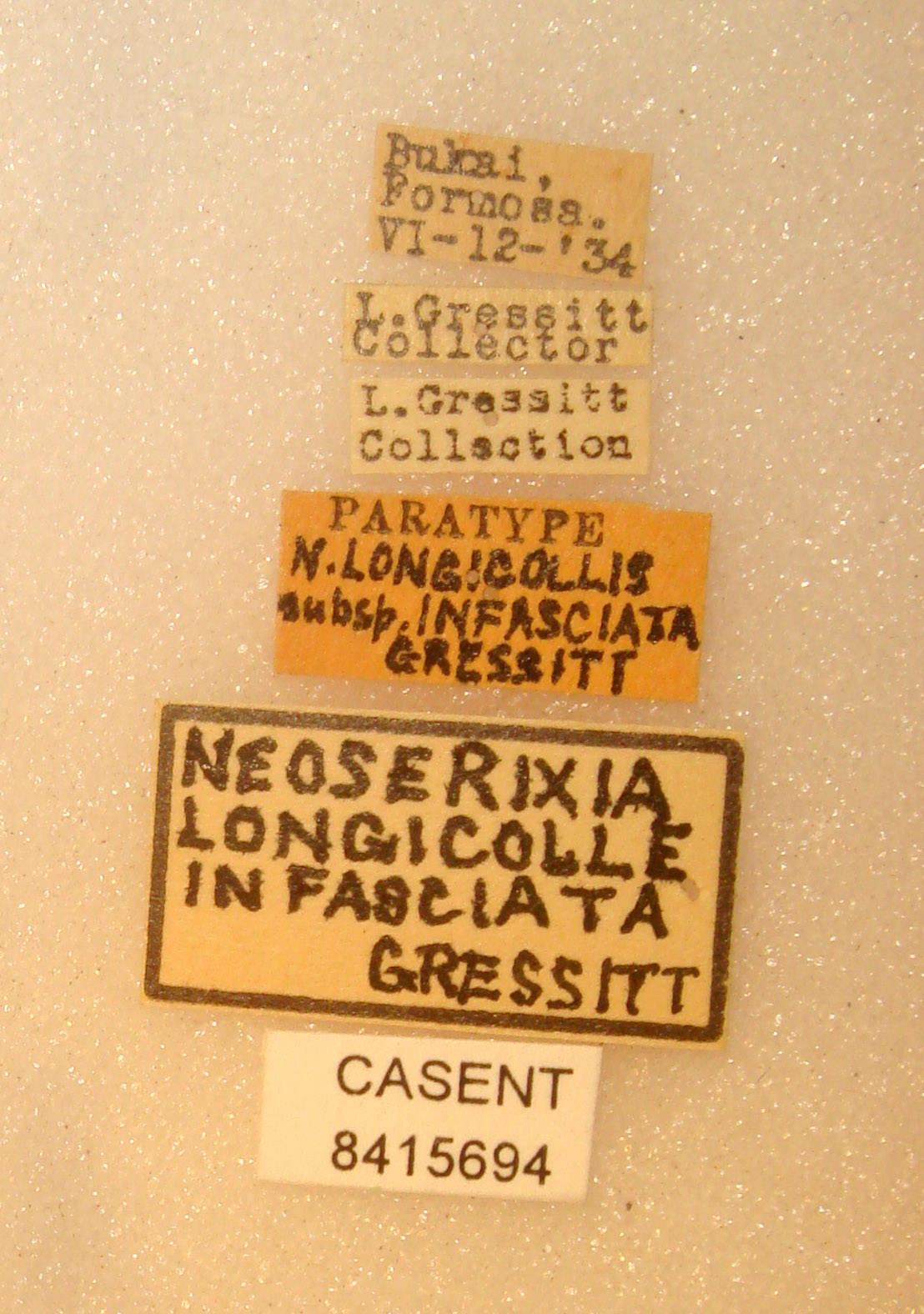 Neoserixia longicollis infasciatus image