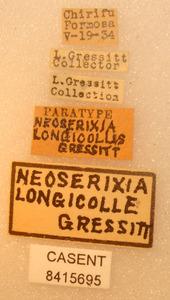 Image of Neoserixia longicollis