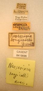 Neoserixia longicollis image