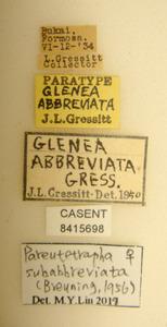Glenea abbreviata image