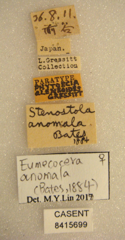 Eumecocera anomala image